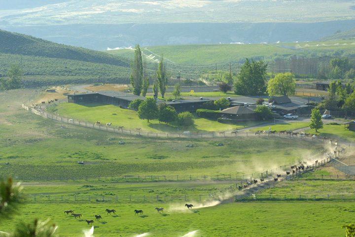 Pferde an der Sundance Guest Ranch