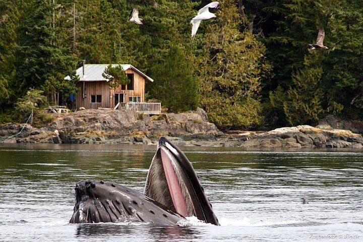 Wal taucht auf