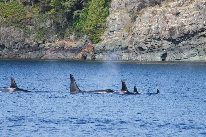 Orcaschule